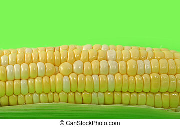 corncob on green fluo background