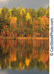 Autumn symmetry - Autumn lake in Kareliya, brightly shined...