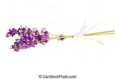 lavender - A colorful sprig of fresh lavender.