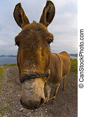 Donkey - Image shows a donkey photographed with a wide angle...