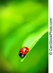 Ladybug on the end of a green leaf
