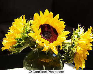 Sunflowers Brightly Lit - Three brightly lit sunflowers in...