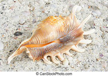 Mollusk lying on the sand at the beach