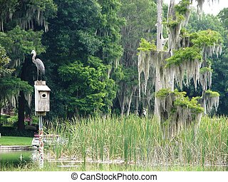 large heron on birdhouse - a large heron resting on a bird...