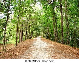 endless trail - a wooded trail lined by trees