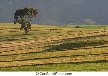 Rural landscape with a large tree, pastures and grazing...