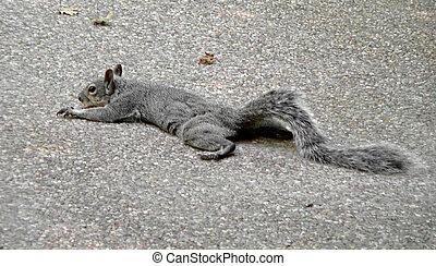 preguiçoso, esquilo
