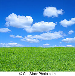 summer meadow - empty summer meadow against summrer sky with...