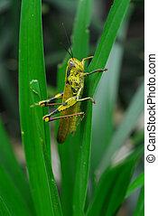 locus2 - locus hiding amongst the grass