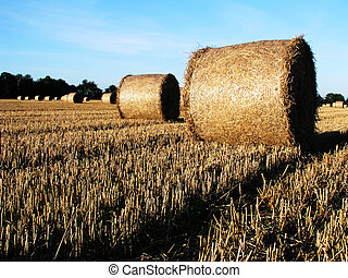 hay bales at harvest time in a field