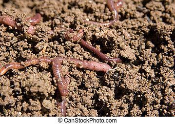 composting, gusanos