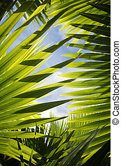 Foest Abstract - Backlit jungle leaves with blue sky visible