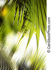 Abstract Forest Background - Backlit jungle palm leaves as...