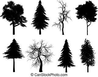 árbol, Siluetas