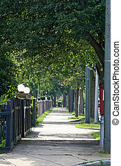 tree lined suburbia - tree lined street on a summer...
