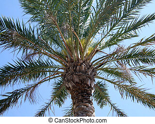 Summer Palm Tree - Here is a large palm tree with the sky as...