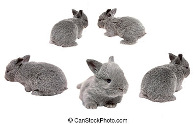Baby Bunnies - bunnies on a white background hopping...
