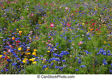 Field of wildflowers - Vibrant field of wildflowers