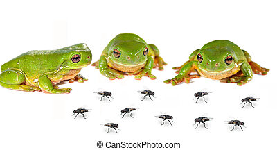 smorgasbord three frogs and flies - smorgasbord three green...