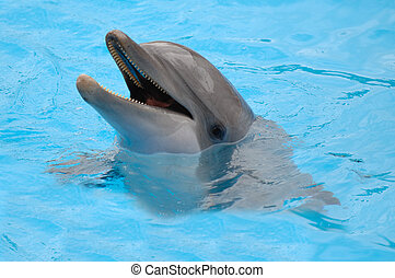 Happy dolphin is swimming in the water.