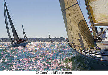 Racing In The Evening Sun - A group of yachts racing in the...