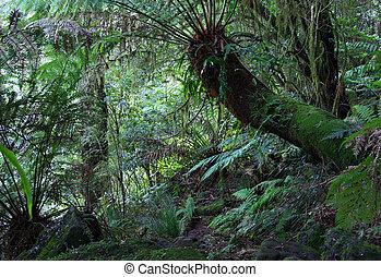 rainforest ferns - ferns, treeferns and other plants under...