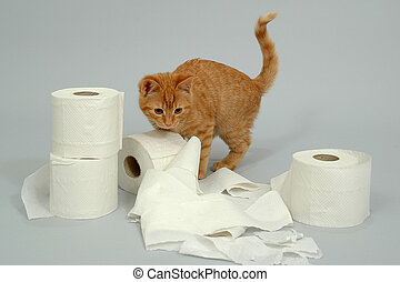 Kitten is playing with toiletpaper