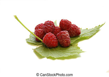 Raspberry on the leaf. Still life