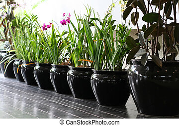 Tropical flowers - Row of tropical flowers in black ceramic...