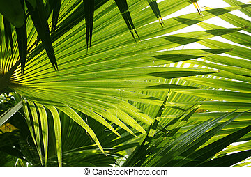 Forest Abstract - Backlit jungle palm leaves as an abstract...