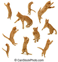 collection of kittens in action. On white background. 3500 x...