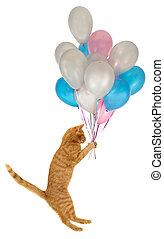 Flying balloon cat. Taken on clean white background.