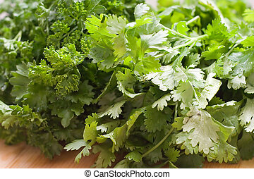 Cilantro - A bunch of fresh cilantro with a bunch of...