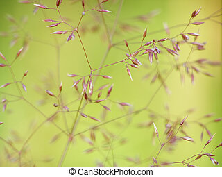 fine grass - Close-up of fine green grass structure against...