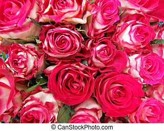 Pink roses - Bunch of vibrant pink roses bouquet background