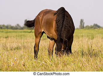 Horse - This is very beuty horse in the meadow