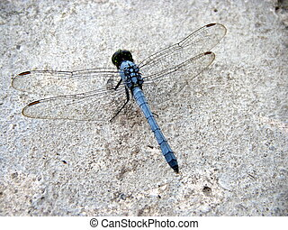 Dragonfly - I captured this photo while the dragonfly was...