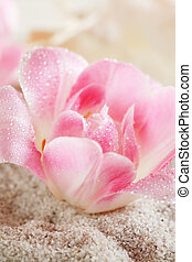 Nature elements - Nature element - sand and flowers