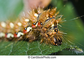Caterpillar close-up