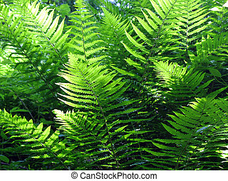 Jungle 2 - Jungle with ferns and other tight vegetation