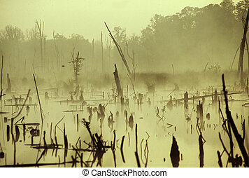 Swamp at Dusk - Swamp with dead trees and plants in the...