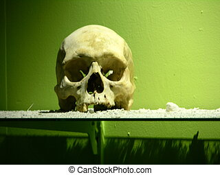 Cannibal Victim - Human Skull in the National Museum of...
