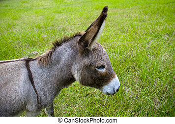 donkey head - a cute grey brown donkey head with big ears in...