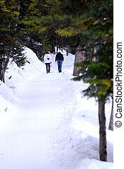 caminho, nevado