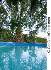 Palm and Pool