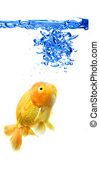 Goldfish - A shot of a goldfish in a fish tank with abstract...