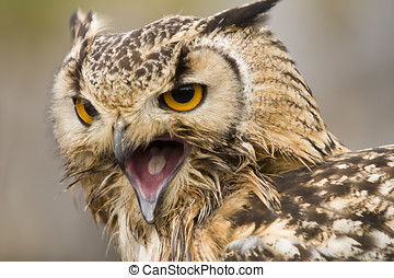 Bengal Eagle Owl Bubo Bubo Bengalensis - landscape...