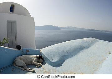 dog sleeping santorini - dog sleeping in shade classic greek...