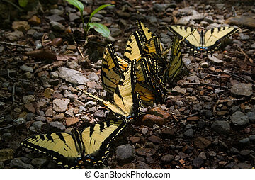 Yellow butterflies in a row. - Yellow Butterflies in a row...