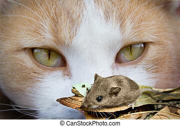 katt, Ögon, mus